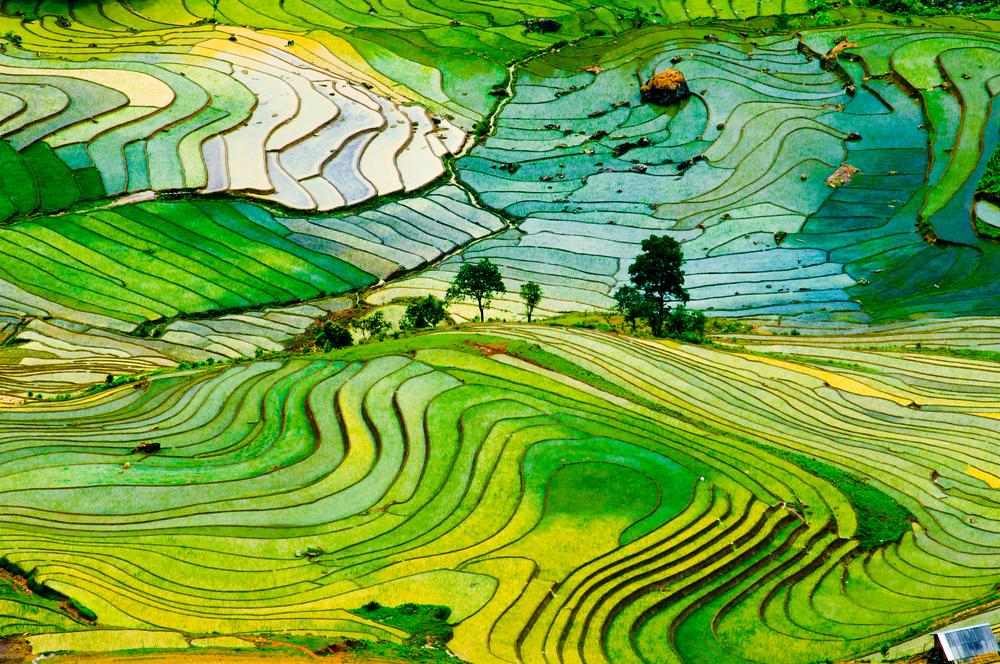 Inflazione degli alimentari: ripresa per i titoli dell'agricoltura