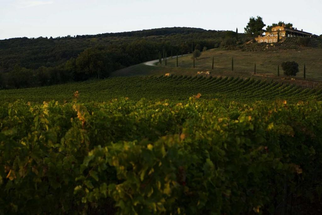 tenuta Conti di San Bonifacio Wine