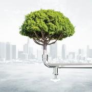 Crescere in modo sostenibile